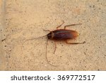 oriental cockroaches and... | Shutterstock . vector #369772517
