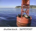 Seals On A Buoy Near San Diego...