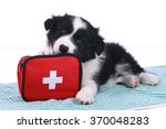 cute border collie puppy with... | Shutterstock . vector #370048283