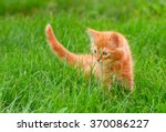 Funny Cat In The Green Grass I...