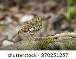 scaly thrush | Shutterstock . vector #370251257