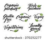 hand drawn healthy food brush... | Shutterstock .eps vector #370252277