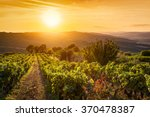 vineyard wonderful landscape in ... | Shutterstock . vector #370478387
