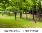 quiet green park. | Shutterstock . vector #370544603
