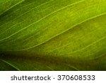 Green Leaf Macro  Green Leaf...
