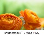 Close Up Of Blooming Ranunculu...