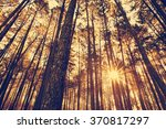 Sunset Silhouette With Fir...