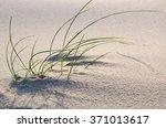 Beach Grass In The Sand. Singl...