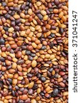 Small photo of Horse gram / Beans used in Indian cooking
