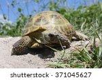 russian tortoise   Shutterstock . vector #371045627
