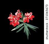Nerium Oleander Vector Isolate...
