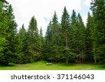fir forest in the national park ...   Shutterstock . vector #371146043