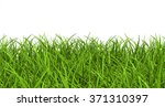green leaves of grass blades  ... | Shutterstock . vector #371310397