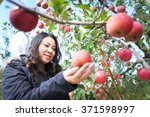 Woman Picking Apples From An...