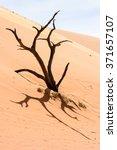 Small photo of Dead Acacia erioloba in the Dead Vlei (Dead Valley), Namibia Desert, Africa