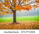 colorful autumn leaves on this... | Shutterstock . vector #371771503