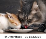 Stock photo cats eat cat food big cat and small kitten eating pieces of meat from the plate we see pink 371833393