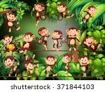 monkeys doing different things... | Shutterstock .eps vector #371844103