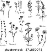 Hand Drawn Medical Plants ...