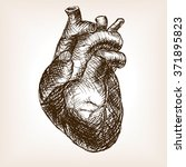 human heart sketch style ... | Shutterstock .eps vector #371895823