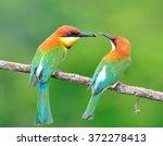 beautiful bee eater bird ... | Shutterstock . vector #372278413