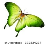 color butterfly   isolated on... | Shutterstock . vector #372334237