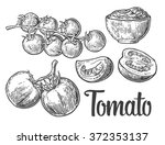 Set Of Hand Drawn Tomatoes...