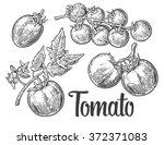 tomatoes. engraving vintage... | Shutterstock .eps vector #372371083