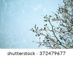 branch and sky background... | Shutterstock . vector #372479677