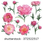 vector peony flat lay. vintage... | Shutterstock .eps vector #372522517