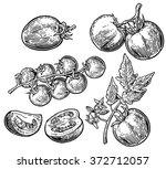tomato  half and slice.... | Shutterstock .eps vector #372712057
