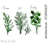 watercolor food clipart   herbs | Shutterstock . vector #372832627