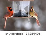 Male And Female Cardinal Eating