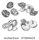 vector nuts sketch drawing... | Shutterstock .eps vector #373004623