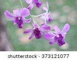 orchid purple flower bokeh...   Shutterstock . vector #373121077