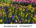 Bed Of Colorful Flowers And...