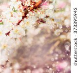 spring blossom in garden or... | Shutterstock . vector #373395943