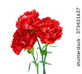 Beautiful Red Carnation Flower...