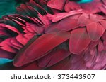 pattern of feather for... | Shutterstock . vector #373443907