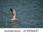 danube delta seagull | Shutterstock . vector #373556437