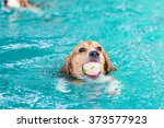 young beagle dog period toy and ... | Shutterstock . vector #373577923