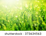 Grass Bokeh. Beauty Nature...