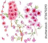 watercolor branch blossom... | Shutterstock . vector #373670293