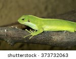 female rare fiji banded iguana  ...   Shutterstock . vector #373732063