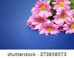Pink Chrysanthemum With Yellow...