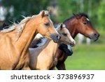 herd of horses. group go horses....