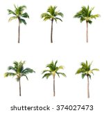 coconut trees on white... | Shutterstock . vector #374027473