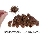 Small photo of Sweet gum tree seed pod from Liquidambar styraciflua, commonly called American sweet gum a deciduous tree in the genus Liquidambar native to warm temperate areas
