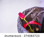 Red Rose In To A Bin