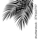 palm leaf vector background... | Shutterstock .eps vector #374163757